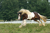 HOR 01 MB0459 01