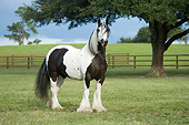HOR 01 MB0461 01