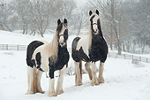 HOR 01 MB0462 01