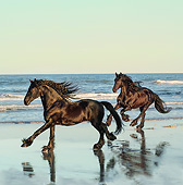HOR 01 MB0465 01