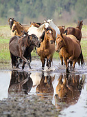 HOR 01 MB0466 01