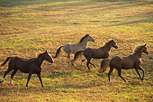 HOR 01 MB0468 01