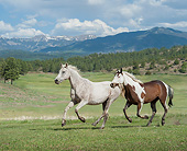 HOR 01 MB0474 01