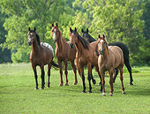 HOR 01 MB0476 01