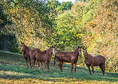 HOR 01 MB0481 01