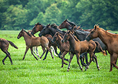 HOR 01 MB0483 01