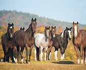 HOR 01 MB0485 01