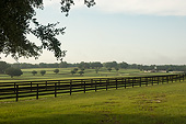 HOR 01 MB0490 01