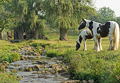 HOR 01 MB0493 01