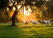 HOR 01 MB0495 01