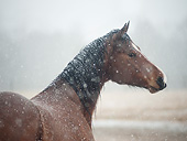 HOR 01 MB0497 01