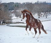 HOR 01 MB0499 01