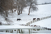 HOR 01 MB0500 01