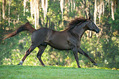 HOR 01 MB0507 01