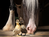 HOR 01 MB0511 01
