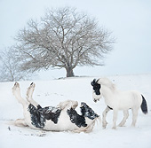 HOR 01 MB0513 01