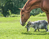 HOR 01 MB0515 01