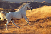 HOR 01 RK0094 03