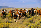 HOR 01 RK0129 15