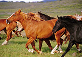 HOR 01 RK0150 03
