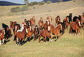 HOR 01 RK0169 01