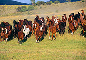 HOR 01 RK0169 15