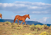 HOR 01 RK0245 01