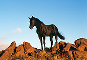 HOR 01 RK0398 05