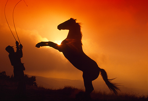 Black Horse Rearing In Sunset | www.pixshark.com - Images ...