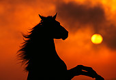 HOR 01 RK0426 01