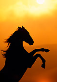 HOR 01 RK0481 13