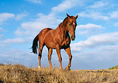 HOR 01 RK0546 02