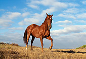 HOR 01 RK0546 08