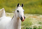 HOR 01 RK0632 01