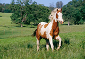 HOR 01 RK0646 01
