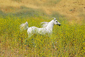 HOR 01 RK0696 30