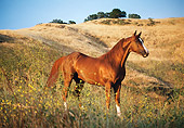HOR 01 RK0697 04