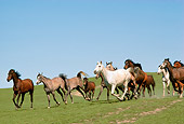 HOR 01 RK0721 24