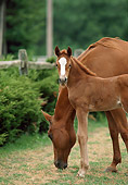 HOR 01 RK0775 01