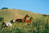 HOR 01 RK0815 08