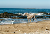 HOR 01 RK0870 08