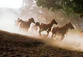 HOR 01 RK0892 17