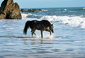 HOR 01 RK0902 53