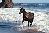 HOR 01 RK0903 37