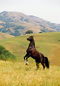 HOR 01 RK0909 20