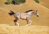 HOR 01 RK0956 20