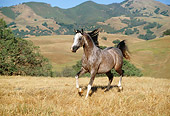 HOR 01 RK0956 21