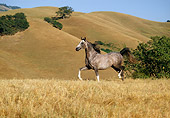 HOR 01 RK0956 40