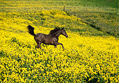 HOR 01 RK0971 07