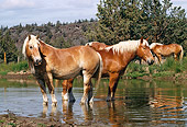 HOR 01 RK1002 14